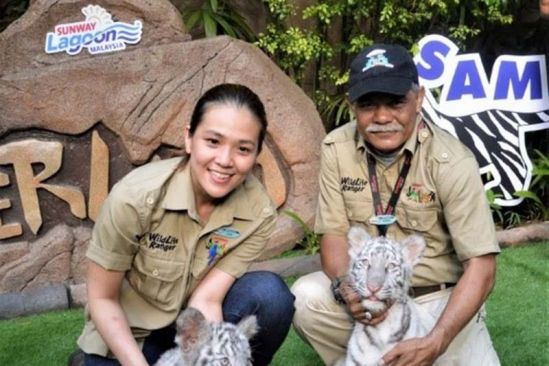 Adorable white tiger cubs to draw visitors to Sunway Lagoon